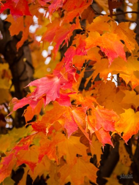 photo of orange maple leaves