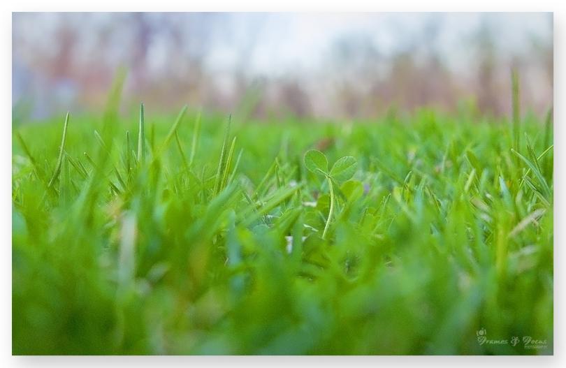Grass-low-POV