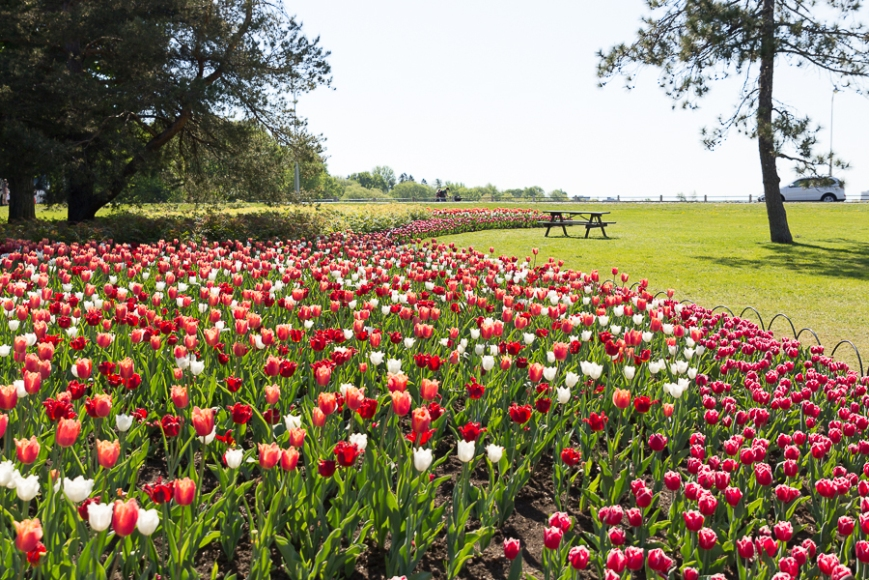 Tulip bed original