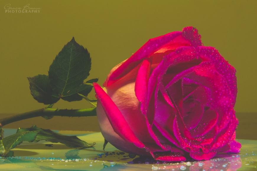 Pink rose matte