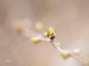 spring thaw
